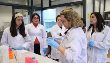 Descubriendo la Bioingeniería